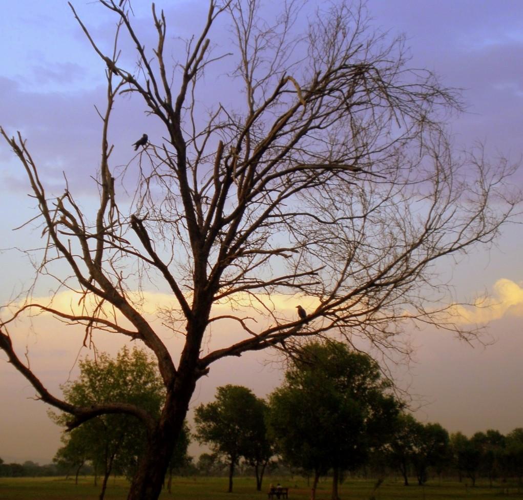 Fatima Jinnah Park Islamabad: Nature And Parks