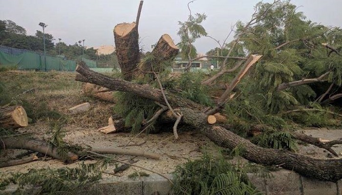 Islamabad finally wakes up to the killing of trees
