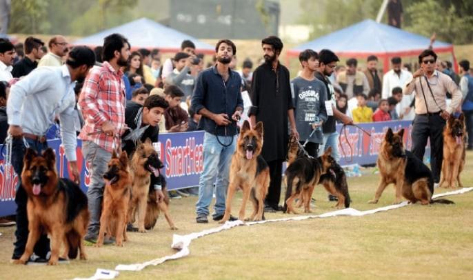 Islamabad and Rawalpindi residents enjoy dog show