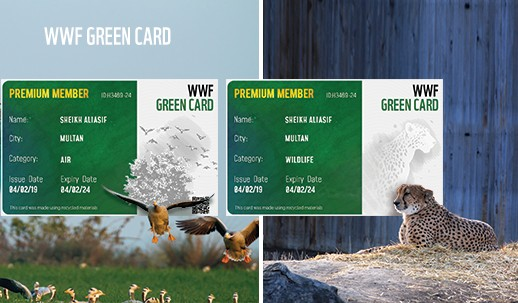 WWF Green Card